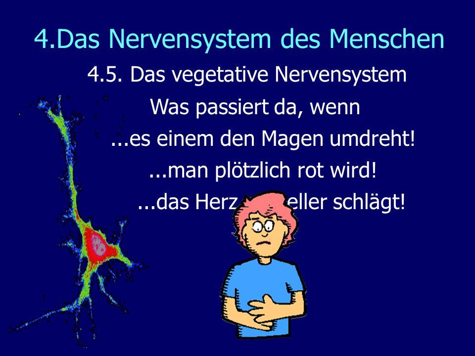 4.Das Nervensystem des Menschen 4.5. Das vegetative Nervensystem Was passiert da, wenn...es einem den Magen umdreht!...man plötzlich rot wird!...das H