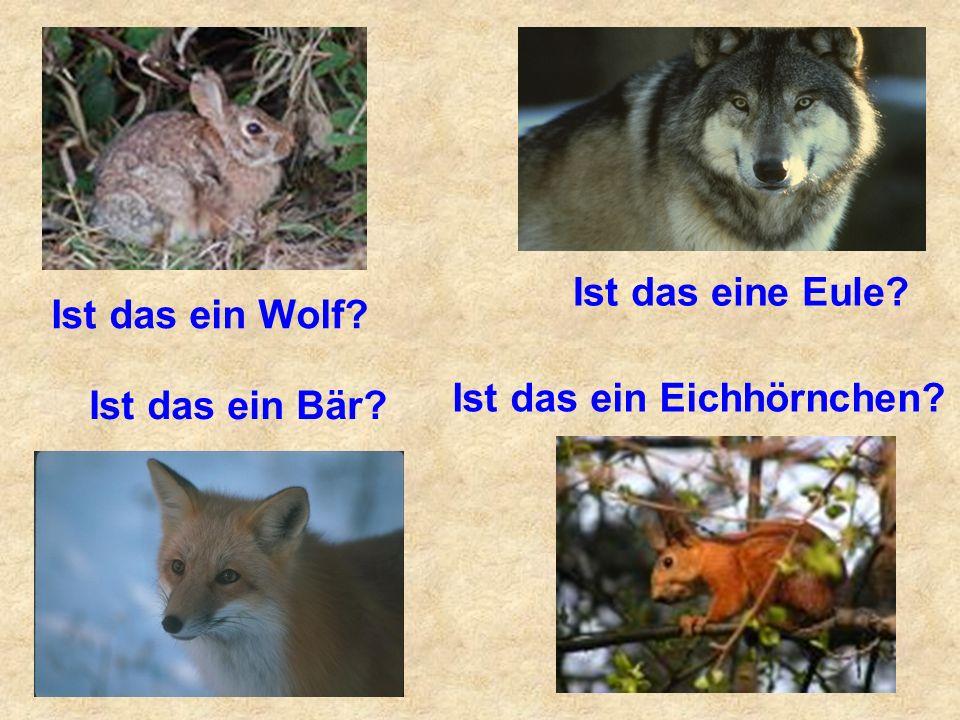 Ist das eine Eule? Ist das ein Bär? Ist das ein Eichhörnchen? Ist das ein Wolf?