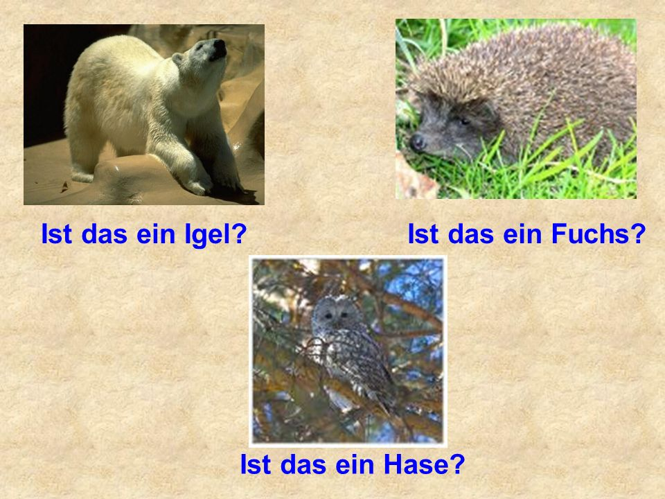 Ist das ein Igel?Ist das ein Fuchs? Ist das ein Hase?