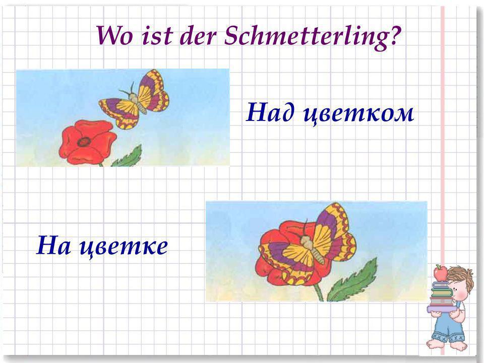 На цветке Wo ist der Schmetterling? Над цветком