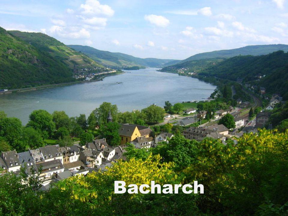 Bacharch