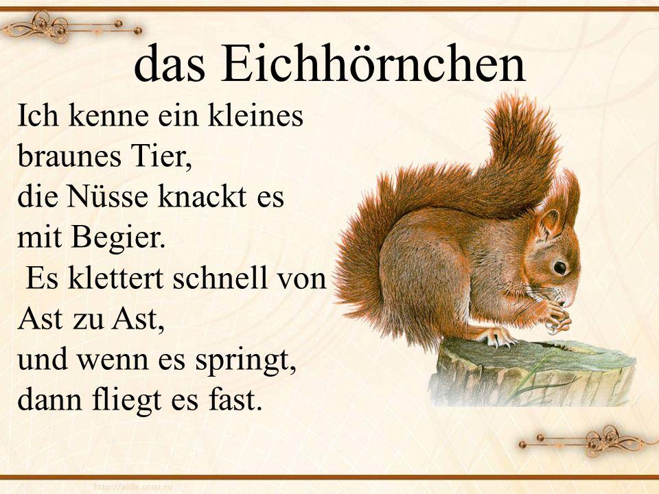 das Eichhörnchen Ich kenne ein kleines braunes Tier, die Nüsse knackt es mit Begier. Es klettert schnell von Ast zu Ast, und wenn es springt, dann fli