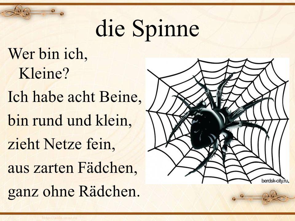 die Spinne Wer bin ich, Kleine? Ich habe acht Beine, bin rund und klein, zieht Netze fein, aus zarten Fädchen, ganz ohne Rädchen.