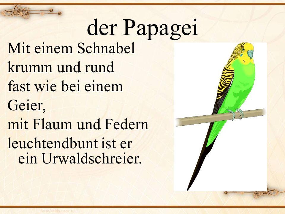 der Papagei Mit einem Schnabel krumm und rund fast wie bei einem Geier, mit Flaum und Federn leuchtendbunt ist er ein Urwaldschreier.