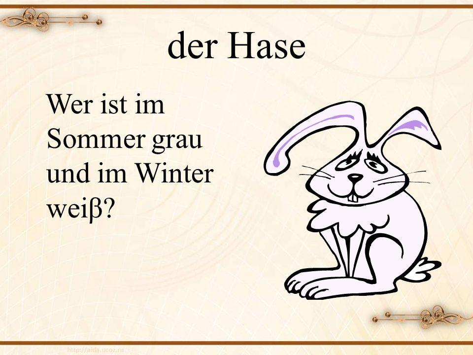 der Hase Wer ist im Sommer grau und im Winter weiβ?