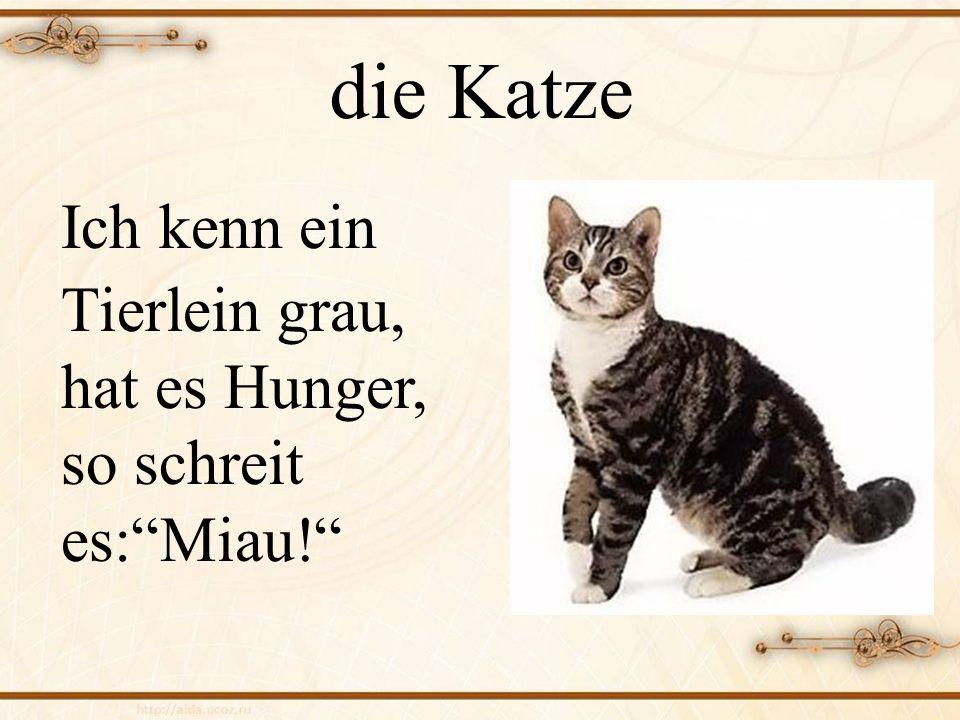 die Katze Ich kenn ein Tierlein grau, hat es Hunger, so schreit es:Miau!