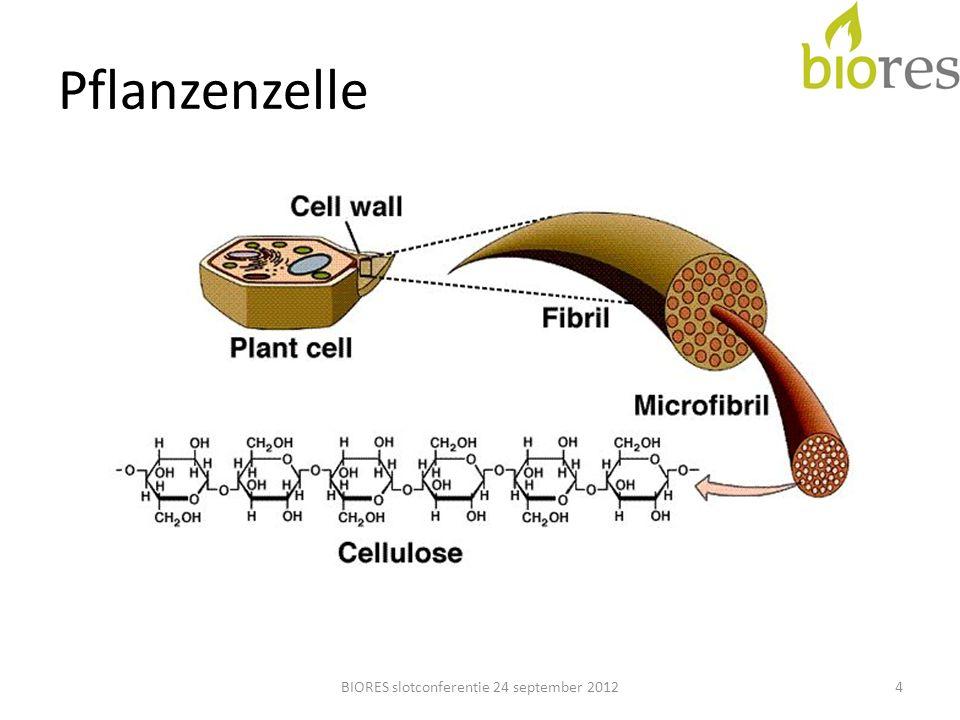 Struktur Lignin Cellulose BIORES slotconferentie 24 september 20125