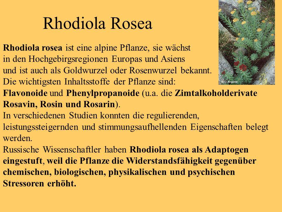 Rhodiola Rosea Rhodiola rosea ist eine alpine Pflanze, sie wächst in den Hochgebirgsregionen Europas und Asiens und ist auch als Goldwurzel oder Rosen