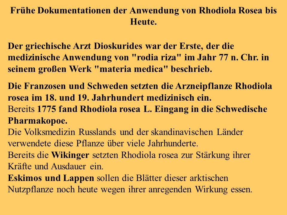 Frühe Dokumentationen der Anwendung von Rhodiola Rosea bis Heute. Der griechische Arzt Dioskurides war der Erste, der die medizinische Anwendung von