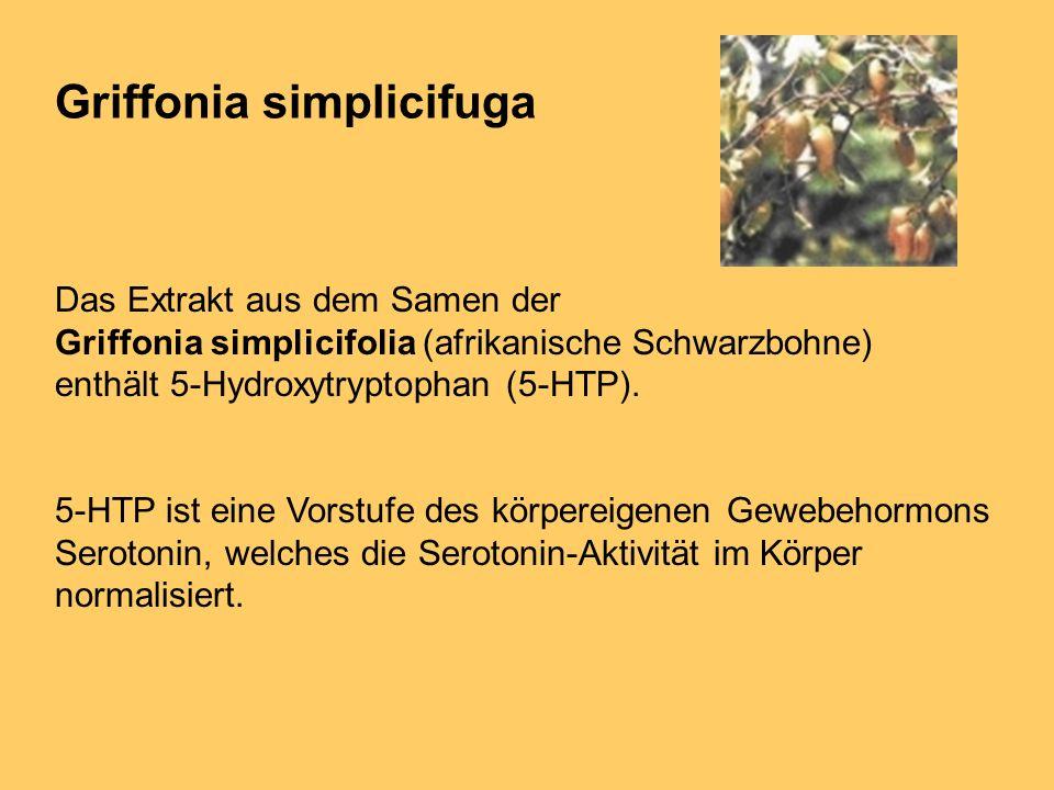 Griffonia simplicifuga Das Extrakt aus dem Samen der Griffonia simplicifolia (afrikanische Schwarzbohne) enthält 5-Hydroxytryptophan (5-HTP). 5-HTP is