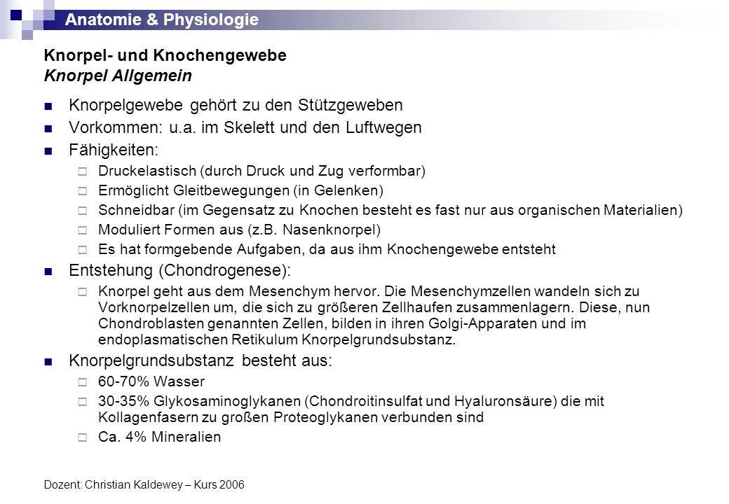 Anatomie & Physiologie Dozent: Christian Kaldewey – Kurs 2006 Knorpel- und Knochengewebe Knorpel Allgemein Knorpelgewebe gehört zu den Stützgeweben Vo