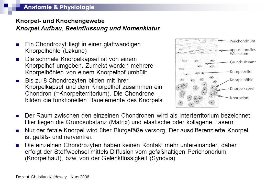 Anatomie & Physiologie Dozent: Christian Kaldewey – Kurs 2006 Ein Chondrozyt liegt in einer glattwandigen Knorpelhöhle (Lakune) Die schmale Knorpelkap