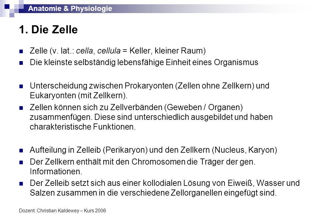Anatomie & Physiologie Dozent: Christian Kaldewey – Kurs 2006 Zelle Prokaryonten (ohne Zellkern) Eukaryonten (mit Zellkern) Plasmamembran / Zellmembran Zellkern Karyoplasma Zellorganellen Mitochondrien Endoplasmatisches Retikulum Golgi-Apparat Ribosomen, Lysosomen Peroxisomen Zentriolen Zytoplasma Prokaryonten sind Organismen, die aus Protozyten (Zellen ohne Zellkern) aufgebaut sind.