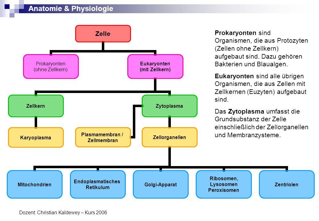Anatomie & Physiologie Dozent: Christian Kaldewey – Kurs 2006 Zelle Prokaryonten (ohne Zellkern) Eukaryonten (mit Zellkern) Plasmamembran / Zellmembra