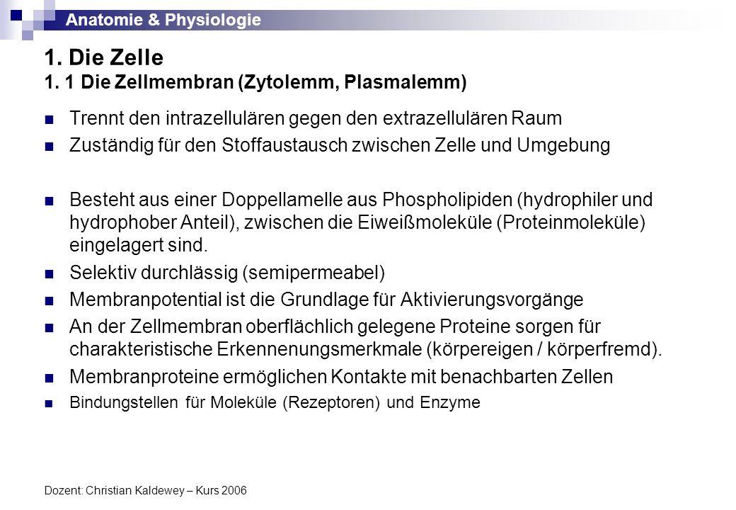 Anatomie & Physiologie Dozent: Christian Kaldewey – Kurs 2006 1. Die Zelle 1. 1 Die Zellmembran (Zytolemm, Plasmalemm) Trennt den intrazellulären gege