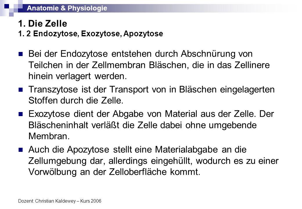 Anatomie & Physiologie Dozent: Christian Kaldewey – Kurs 2006 1. Die Zelle 1. 2 Endozytose, Exozytose, Apozytose Bei der Endozytose entstehen durch Ab