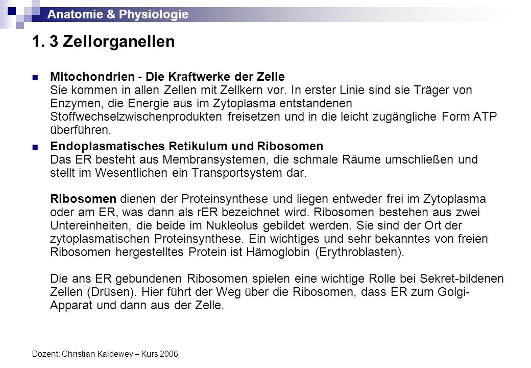Anatomie & Physiologie Dozent: Christian Kaldewey – Kurs 2006 1. 3 Zellorganellen Mitochondrien - Die Kraftwerke der Zelle Sie kommen in allen Zellen