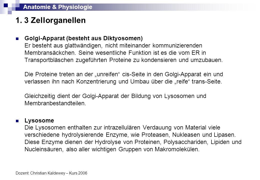 Anatomie & Physiologie Dozent: Christian Kaldewey – Kurs 2006 1. 3 Zellorganellen Golgi-Apparat (besteht aus Diktyosomen) Er besteht aus glattwändigen