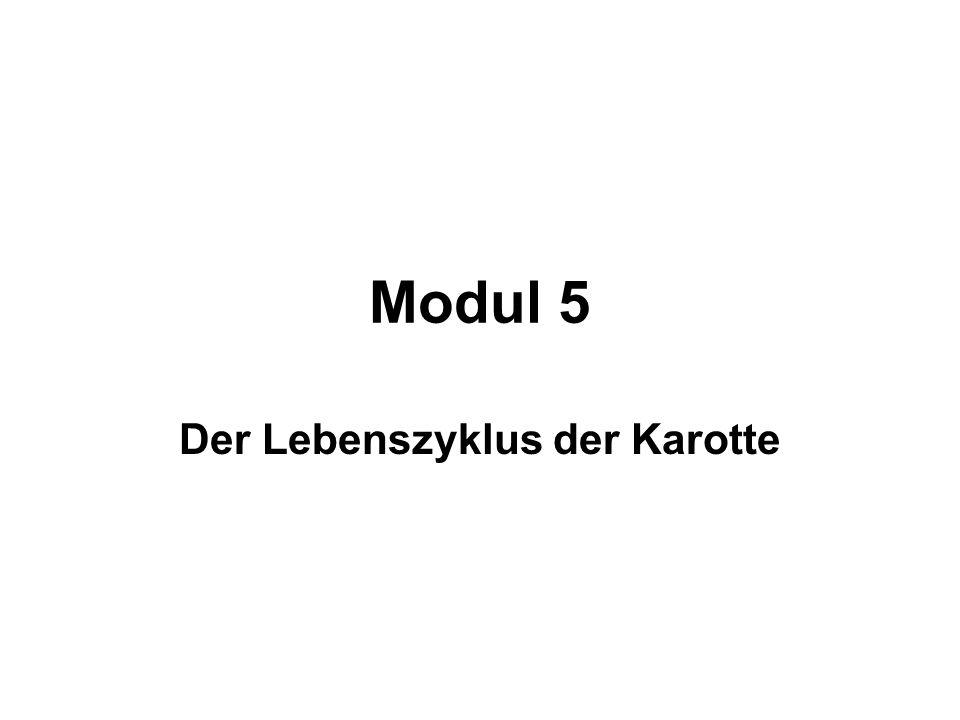 Modul 5 Der Lebenszyklus der Karotte