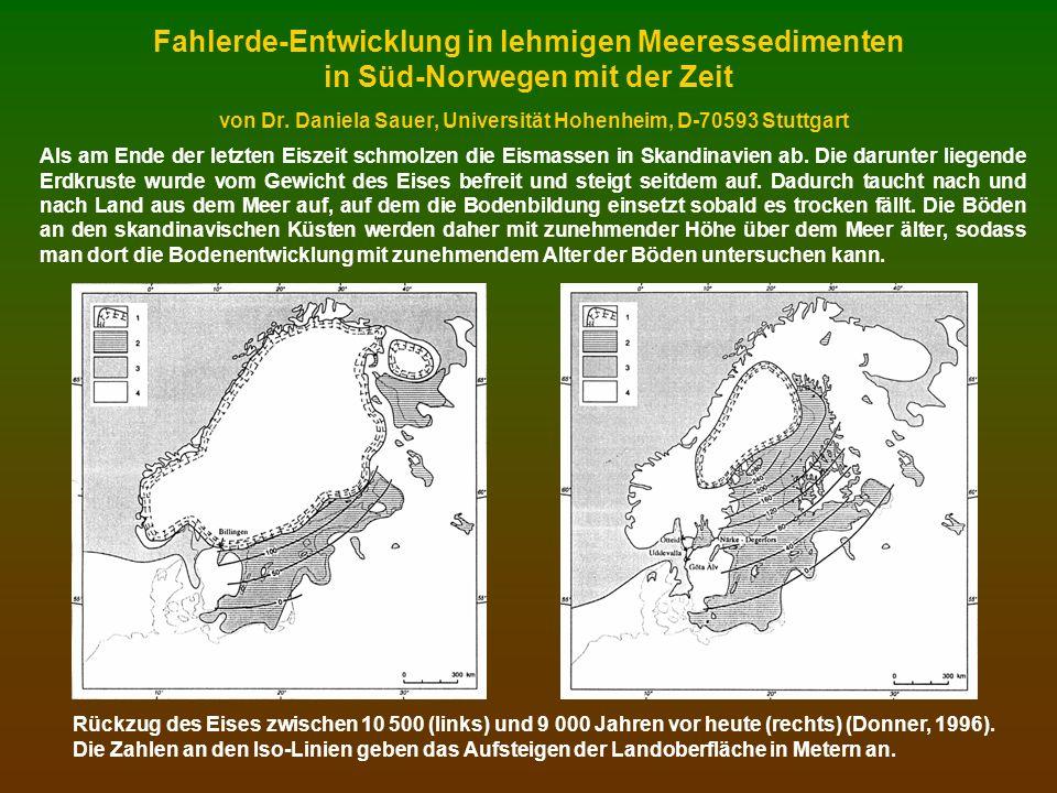 Standort 10: 10 000 Jahre alter Boden: schwach podsolige Braunerde-Pseudogley- Fahlerde nach WRB: Cutanic epistagnic protospodic Albeluvisol