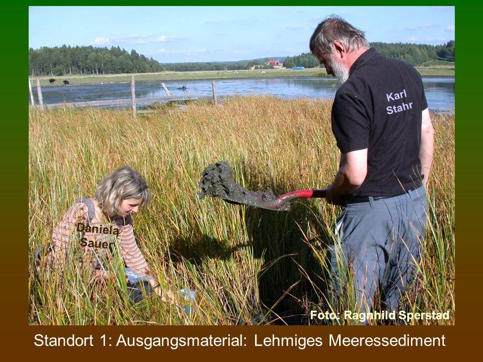 Standort 2: 1 500 Jahre alter Boden: Gley-Pseudogley nach WRB: Endogleyic Stagnosol Dieser Boden zeigt noch keine Tonverlagerung.