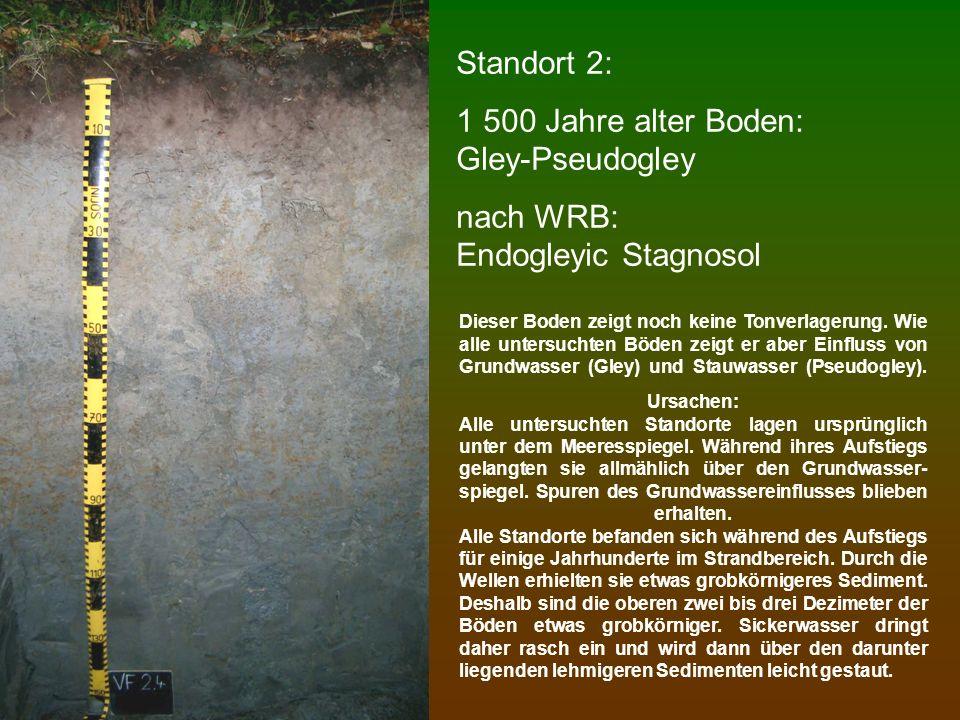 Standort 3: 2 300 Jahre alter Boden: Gley-Pseudogley nach WRB: Endogleyic Stagnosol