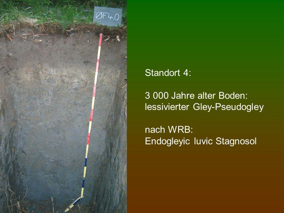 Standort 5: 4 900 Jahre alter Boden: Parabraunerde-Pseudogley nach WRB: Luvic cutanic Stagnosol