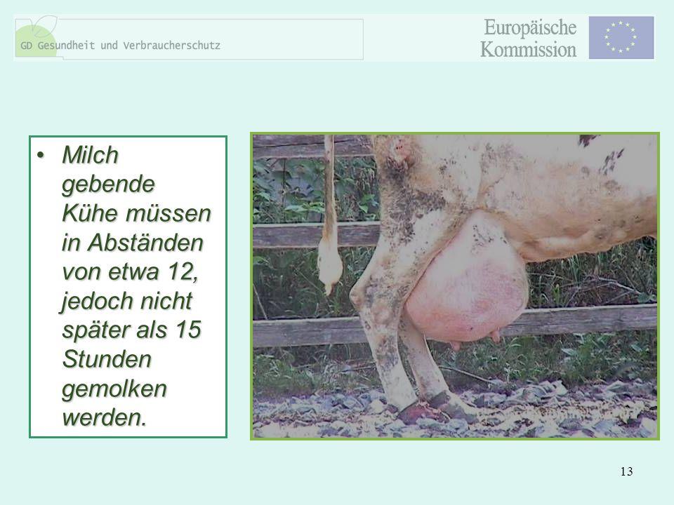 13 Milch gebende Kühe müssen in Abständen von etwa 12, jedoch nicht später als 15 Stunden gemolken werden.Milch gebende Kühe müssen in Abständen von e