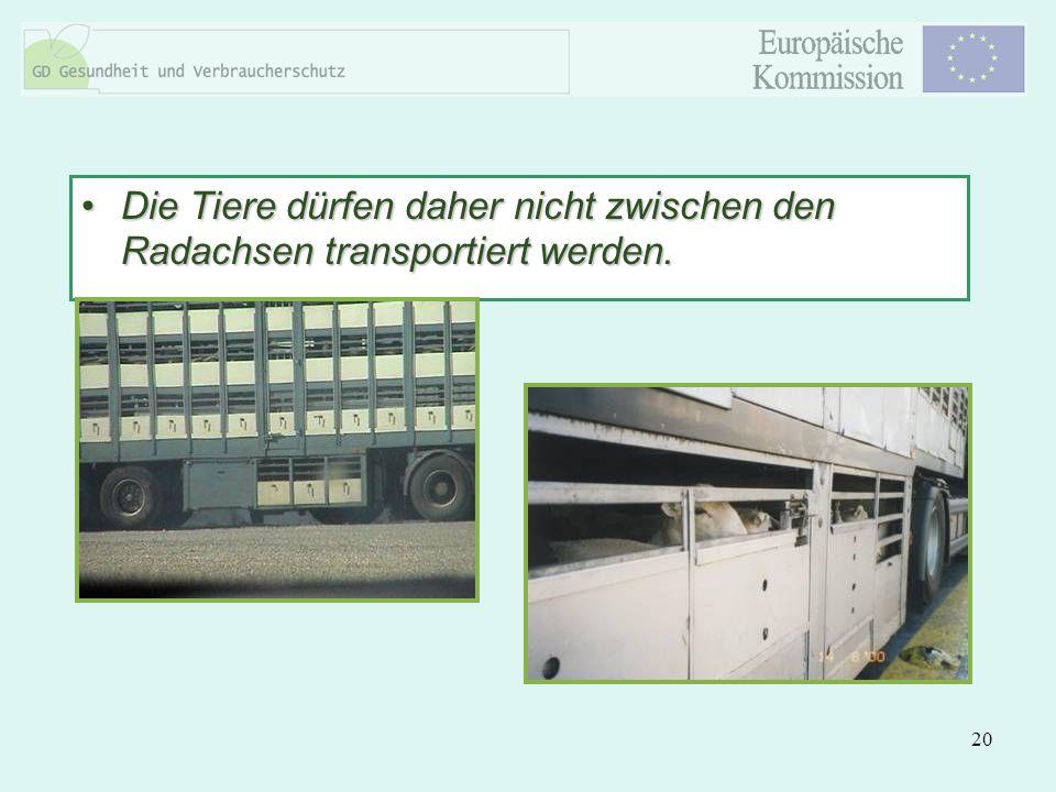 20 Die Tiere dürfen daher nicht zwischen den Radachsen transportiert werden.Die Tiere dürfen daher nicht zwischen den Radachsen transportiert werden.