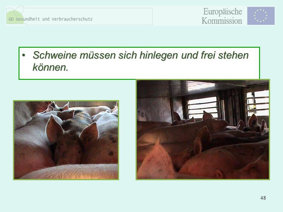 48 Schweine müssen sich hinlegen und frei stehen können.Schweine müssen sich hinlegen und frei stehen können.