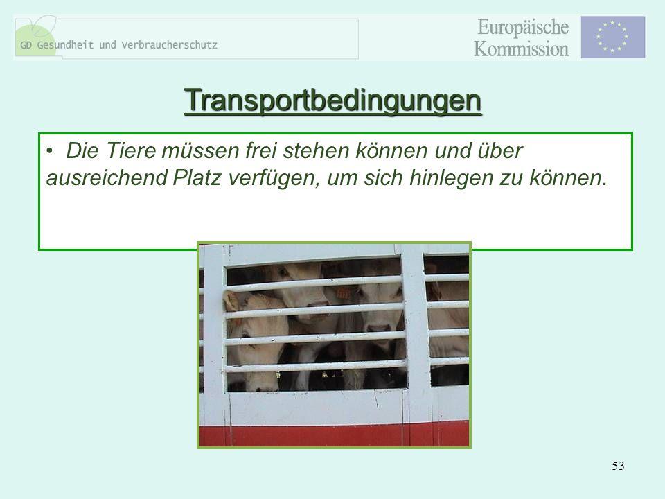 53 Die Tiere müssen frei stehen können und über ausreichend Platz verfügen, um sich hinlegen zu können. Transportbedingungen