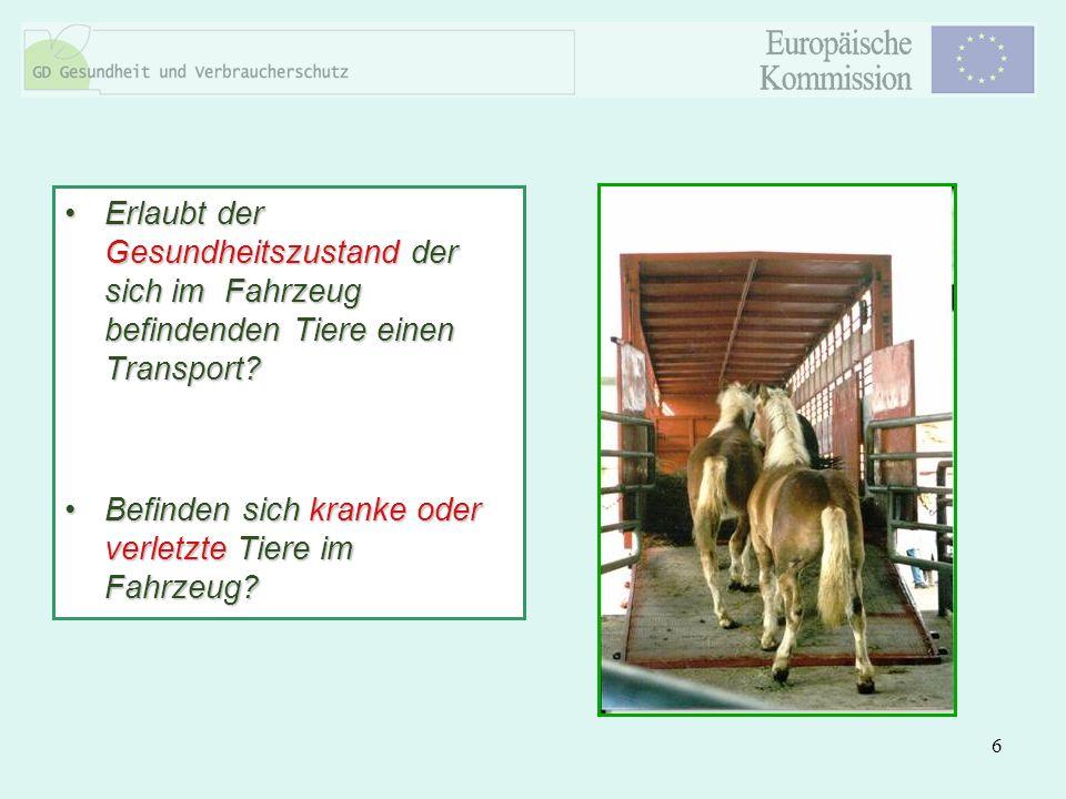 6 Erlaubt der Gesundheitszustand der sich im Fahrzeug befindenden Tiere einen Transport?Erlaubt der Gesundheitszustand der sich im Fahrzeug befindende