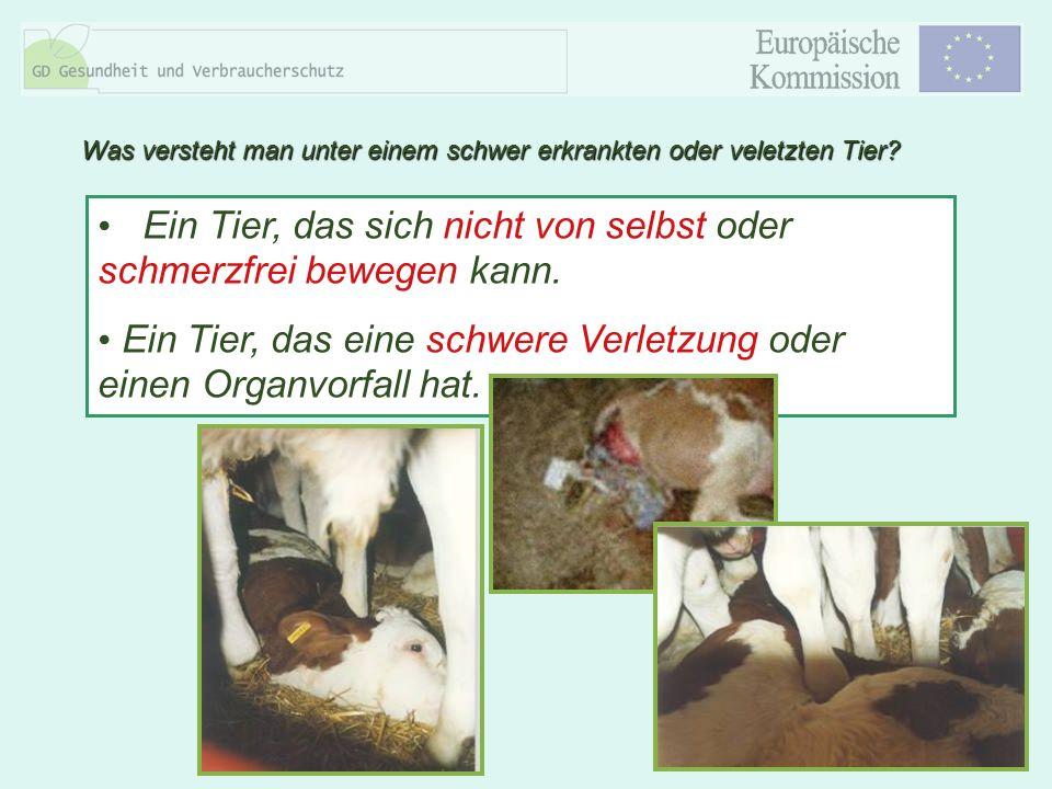 8 Ein Tier, das sich nicht von selbst oder schmerzfrei bewegen kann. Ein Tier, das eine schwere Verletzung oder einen Organvorfall hat. Was versteht m