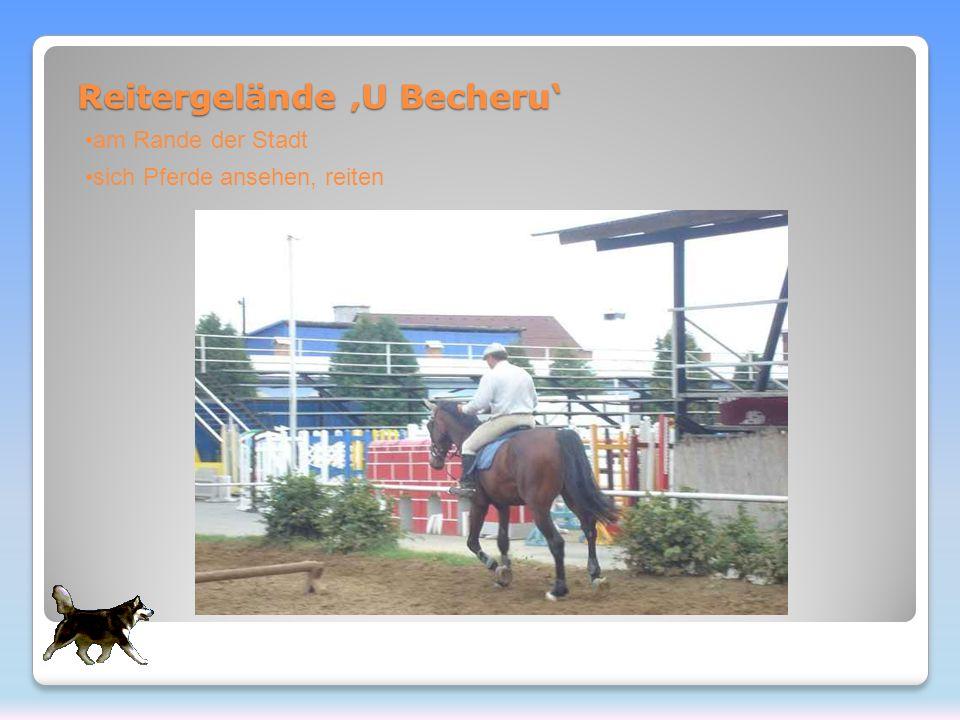 Reitergelände U Becheru am Rande der Stadt sich Pferde ansehen, reiten