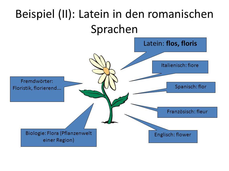 Beispiel (II): Latein in den romanischen Sprachen Latein: flos, floris Italienisch: fiore Spanisch: flor Französisch: fleur Englisch: flower Biologie: