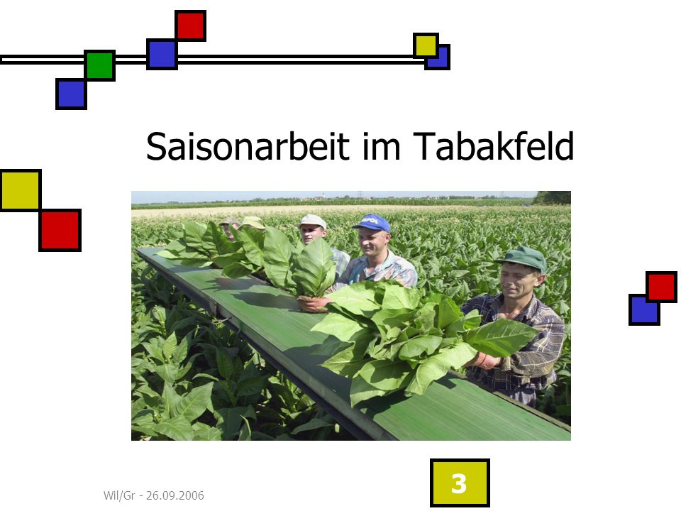 Wil/Gr - 26.09.2006 3 Saisonarbeit im Tabakfeld