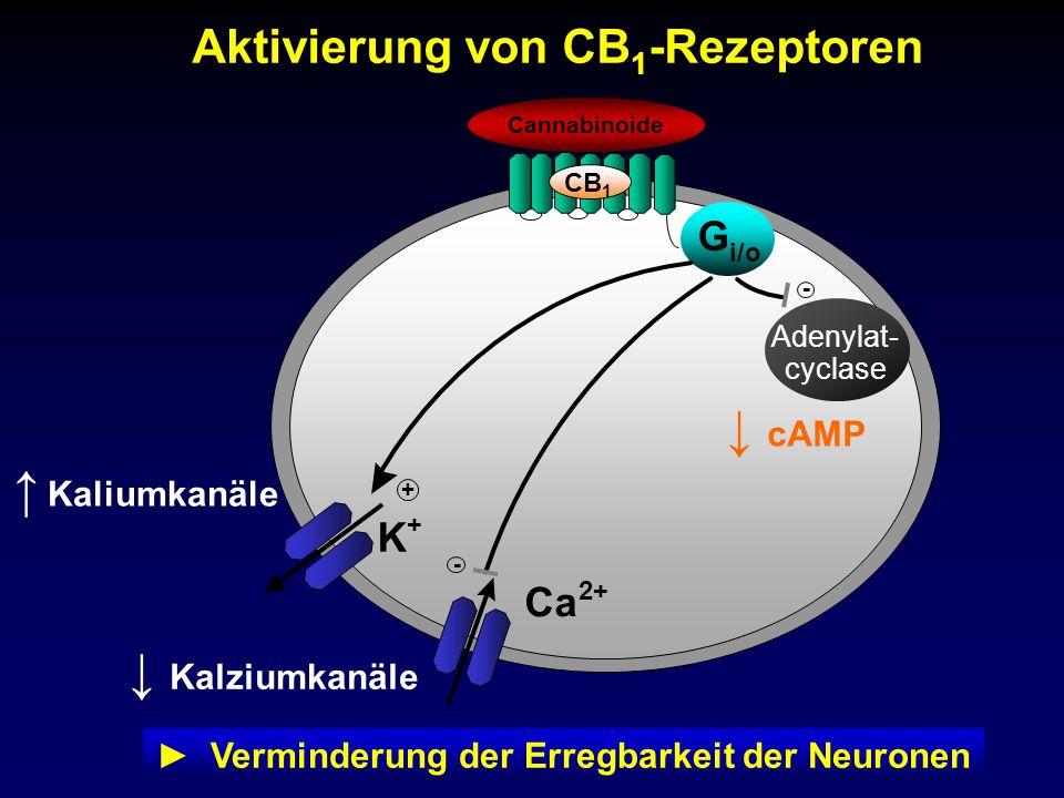 G i/o CB 1 Cannabinoide Aktivierung von CB 1 -Rezeptoren Verminderung der Erregbarkeit der Neuronen Adenylat- cyclase cAMP - Ca 2+ - Kalziumkanäle K +