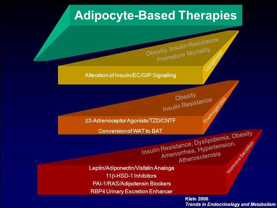 Adipocyte-Based Therapies Alteration of Insulin/EC/GIP Signalling Obesity, Insulin Resistance Premature Mortality Lipogenesis 3-Adrenoceptor Agonists/TZD/CNTF Conversion of WAT to BAT Obesity Insulin Resistance Thermogenesis Leptin/Adiponectin/Visfatin Analoga 11 -HSD-1 Inhibitors PAI-1/RAS/Adipotensin Blockers RBP4 Urinary Excretion Enhancer Insulin Resistance, Dyslipidemia, Obesity Amenorrhea, Hypertension, Atherosclerosis Hormone Secretion Klein 2006 Trends in Endocrinology and Metabolism