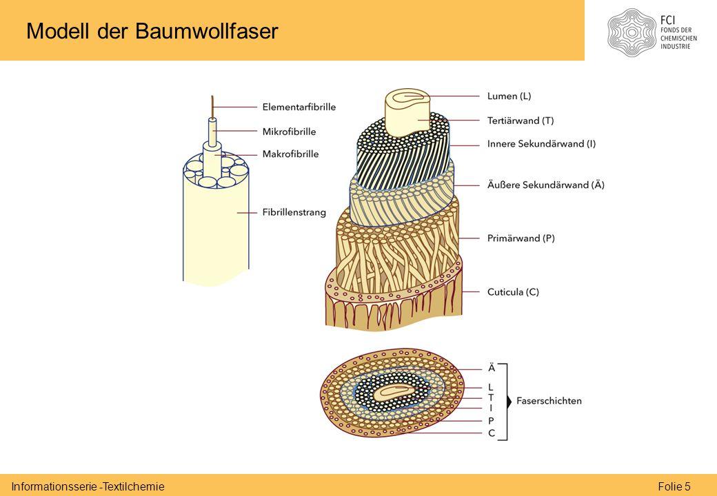Folie 5Informationsserie -Textilchemie Modell der Baumwollfaser