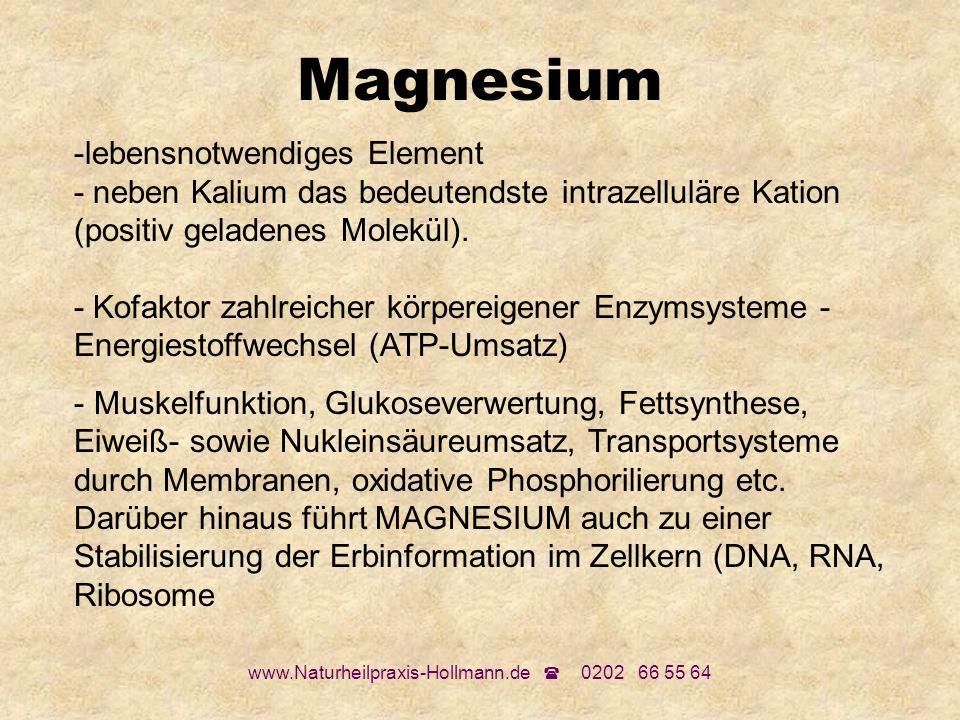 www.Naturheilpraxis-Hollmann.de 0202 66 55 64 Magnesium -lebensnotwendiges Element - neben Kalium das bedeutendste intrazelluläre Kation (positiv gela