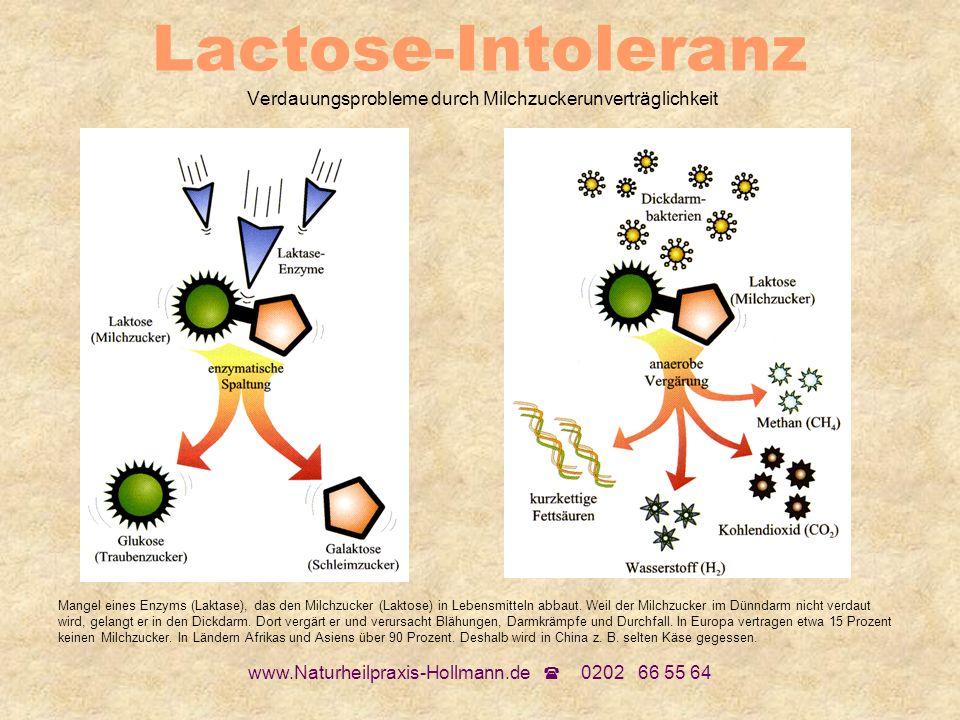 www.Naturheilpraxis-Hollmann.de 0202 66 55 64 Lactose-Intoleranz Verdauungsprobleme durch Milchzuckerunverträglichkeit Mangel eines Enzyms (Laktase),