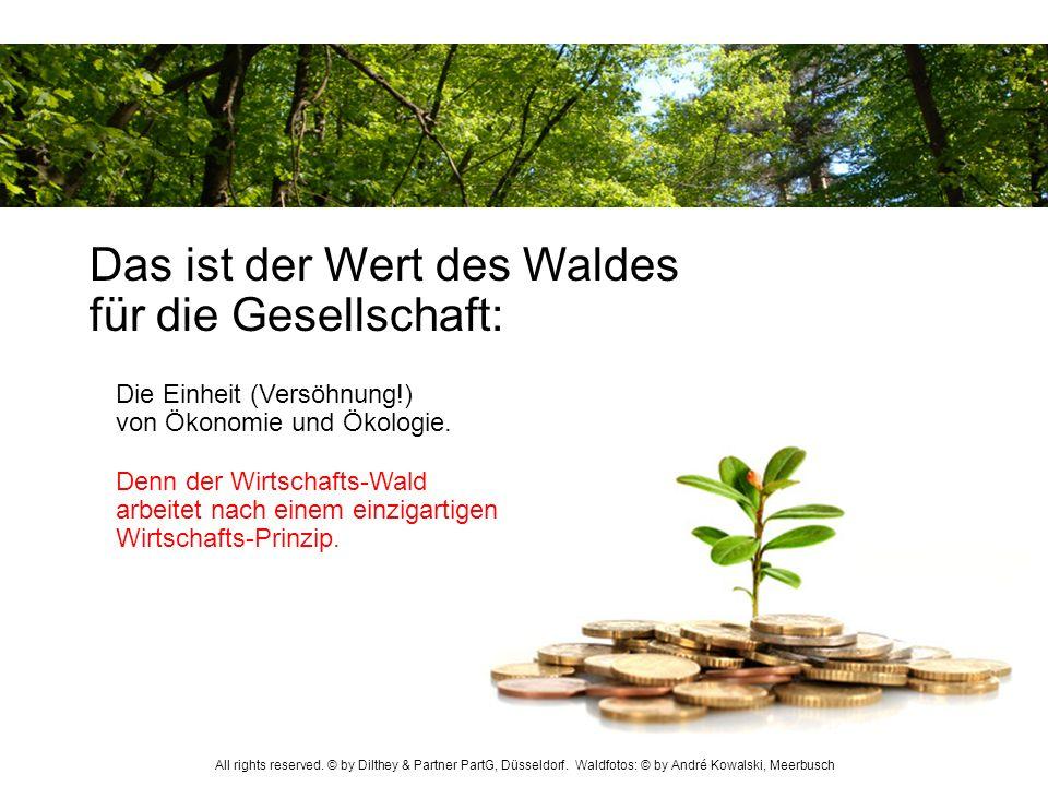 Das ist der Wert des Waldes für die Gesellschaft: Denn der Wirtschafts-Wald arbeitet nach einem einzigartigen Wirtschafts-Prinzip. Die Einheit (Versöh