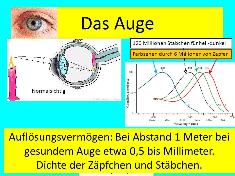 Fäßler, Tübingen Das Auge Normalsichtig 120 Millionen Stäbchen für hell-dunkel Farbsehen durch 6 Millionen von Zapfen Auflösungsvermögen: Bei Abstand