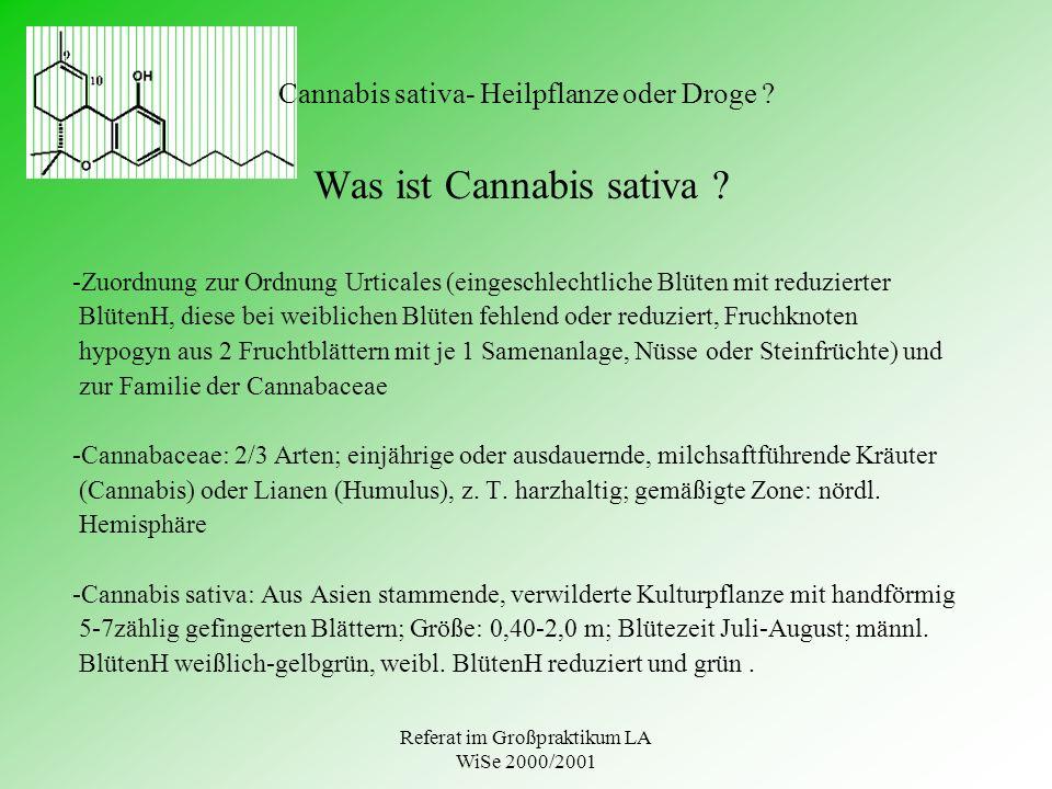Referat im Großpraktikum LA WiSe 2000/2001 Cannabis sativa- Heilpflanze oder Droge ? Was ist Cannabis sativa ? -Zuordnung zur Ordnung Urticales (einge