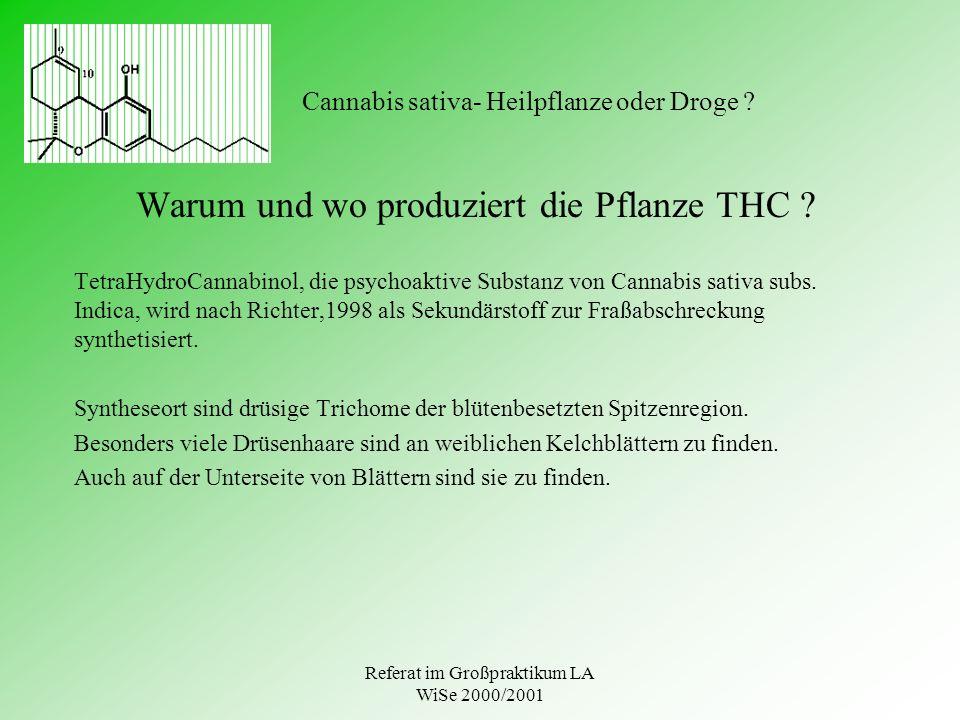 Referat im Großpraktikum LA WiSe 2000/2001 Cannabis sativa- Heilpflanze oder Droge ? Warum und wo produziert die Pflanze THC ? TetraHydroCannabinol, d