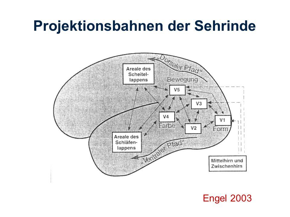 Engel 2003 Projektionsbahnen der Sehrinde