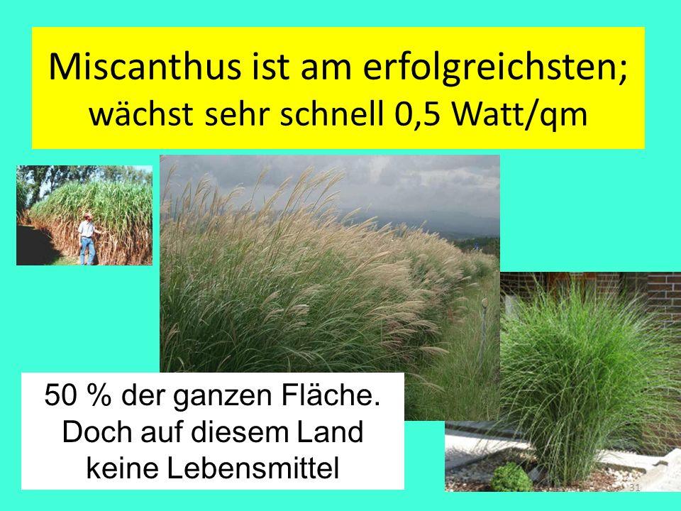 Miscanthus ist am erfolgreichsten; wächst sehr schnell 0,5 Watt/qm 31 50 % der ganzen Fläche. Doch auf diesem Land keine Lebensmittel