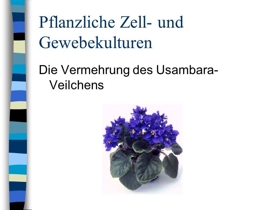Pflanzliche Zell- und Gewebekulturen Die Vermehrung des Usambara- Veilchens
