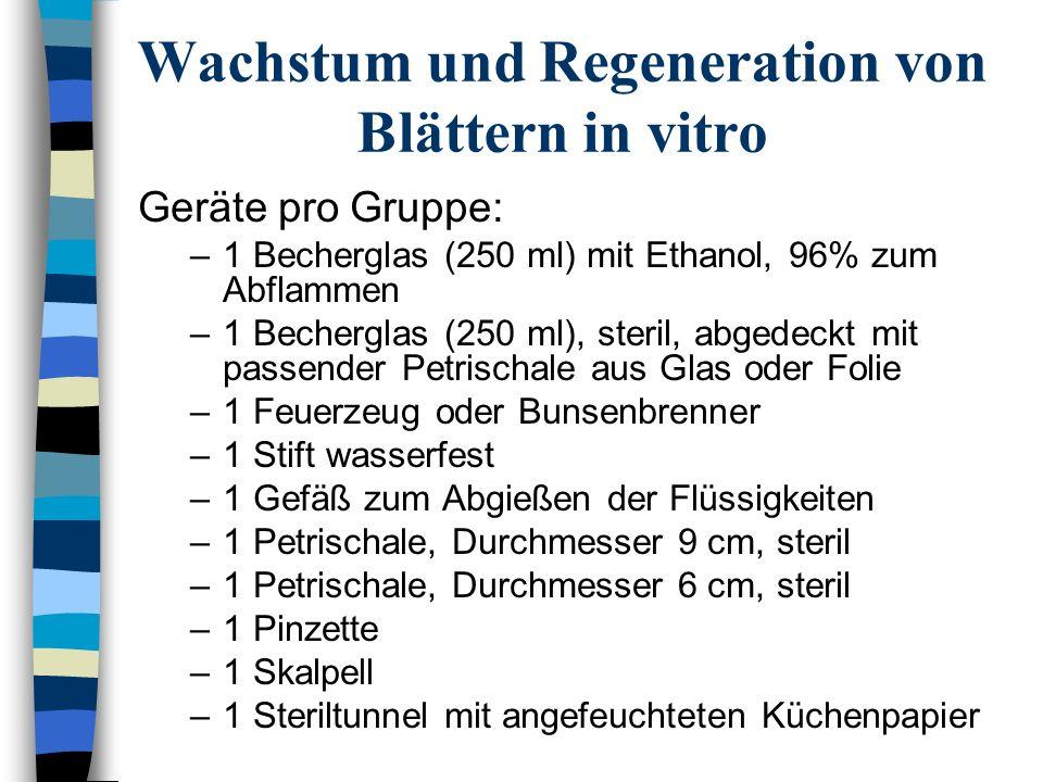 Wachstum und Regeneration von Blättern in vitro Geräte pro Gruppe: –1 Becherglas (250 ml) mit Ethanol, 96% zum Abflammen –1 Becherglas (250 ml), steri
