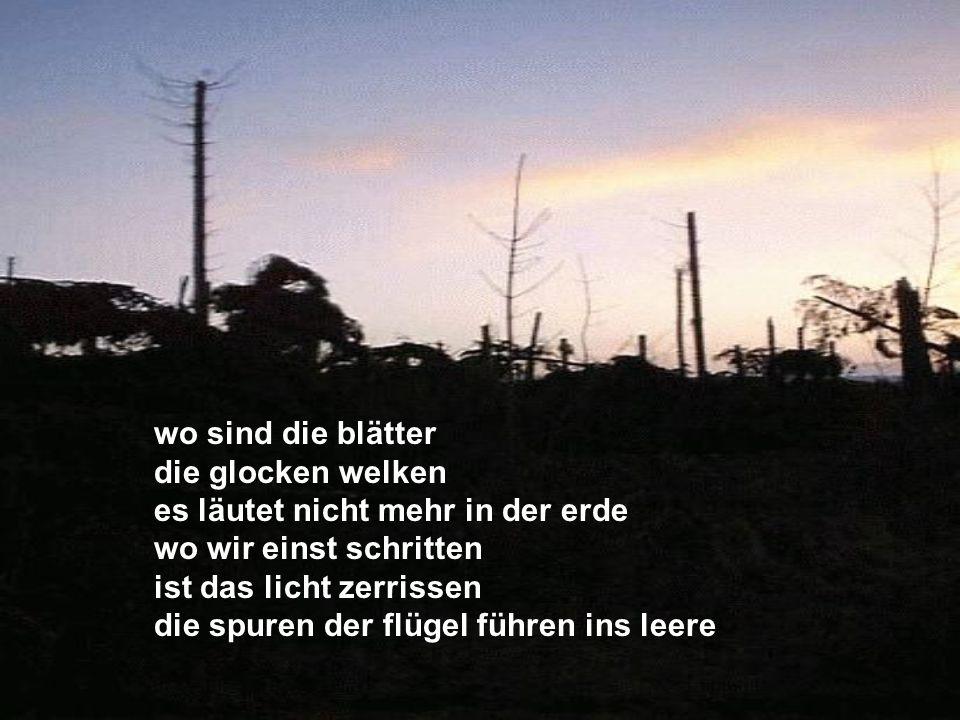 Im Baum, du liebes Vöglein dort, was ist dein Lied, dein Lied im Grund.